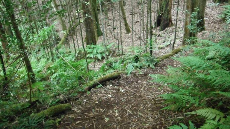 Big Island Trails-dscf0969.jpg