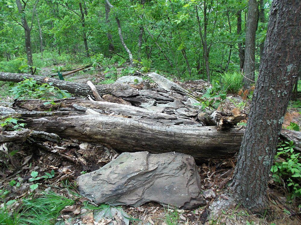 Moon Lake Trail damage reports here-dscf6047_1000x1000.jpg