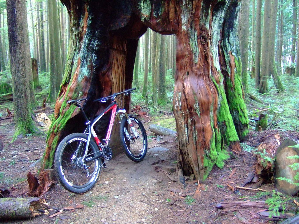 Moving to North of Vancouver, bike advice please ?..-dscf7738-002.jpg