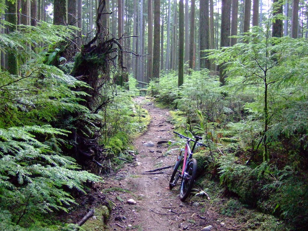 Moving to North of Vancouver, bike advice please ?..-dscf7742.jpg