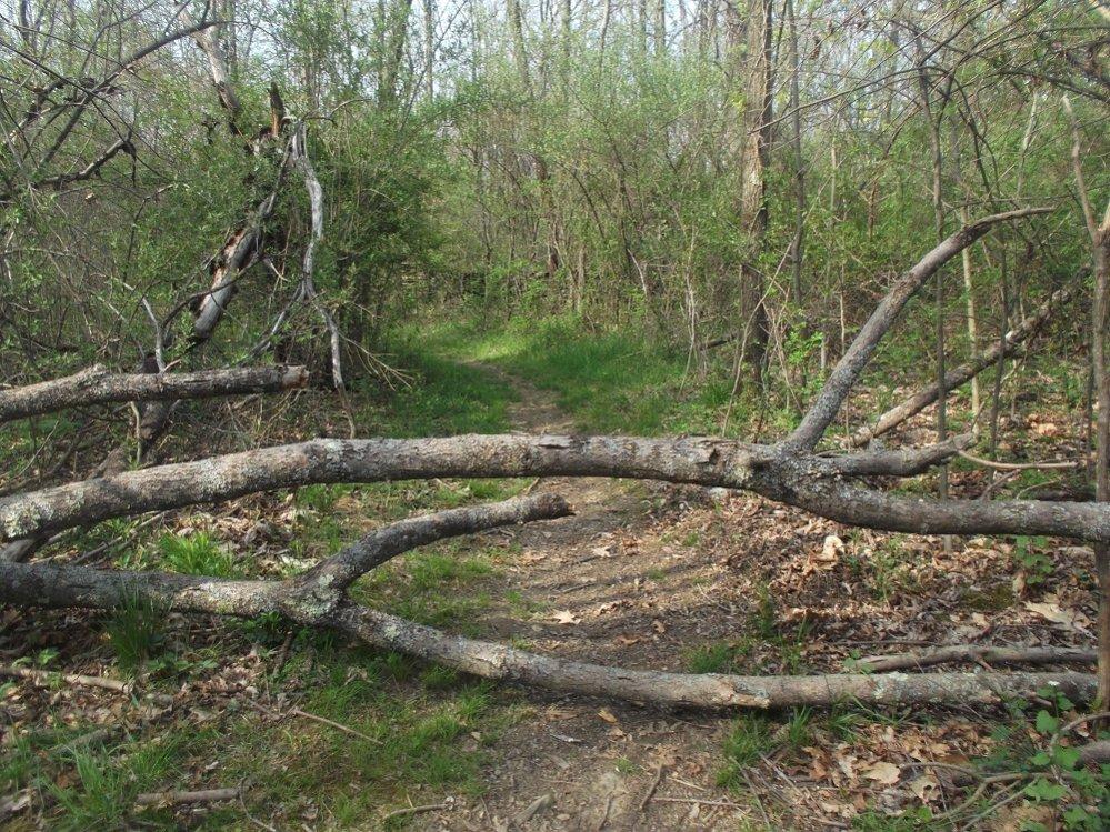 Trees down at Frances Slocum-dscf8526resize.jpg