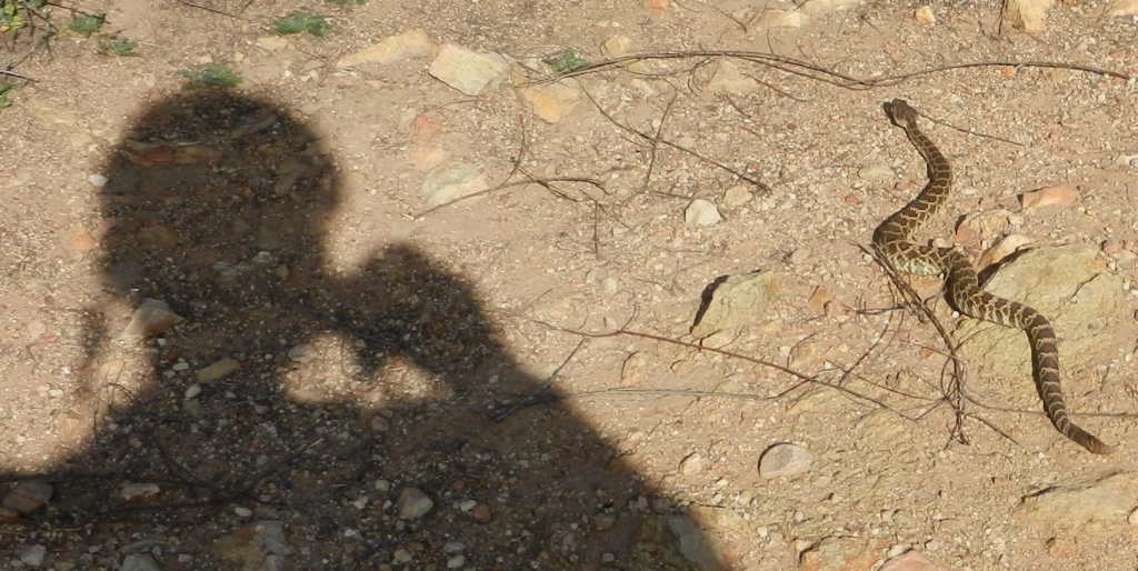 Rattlesnakes!!!!!!-dscn0355.jpg