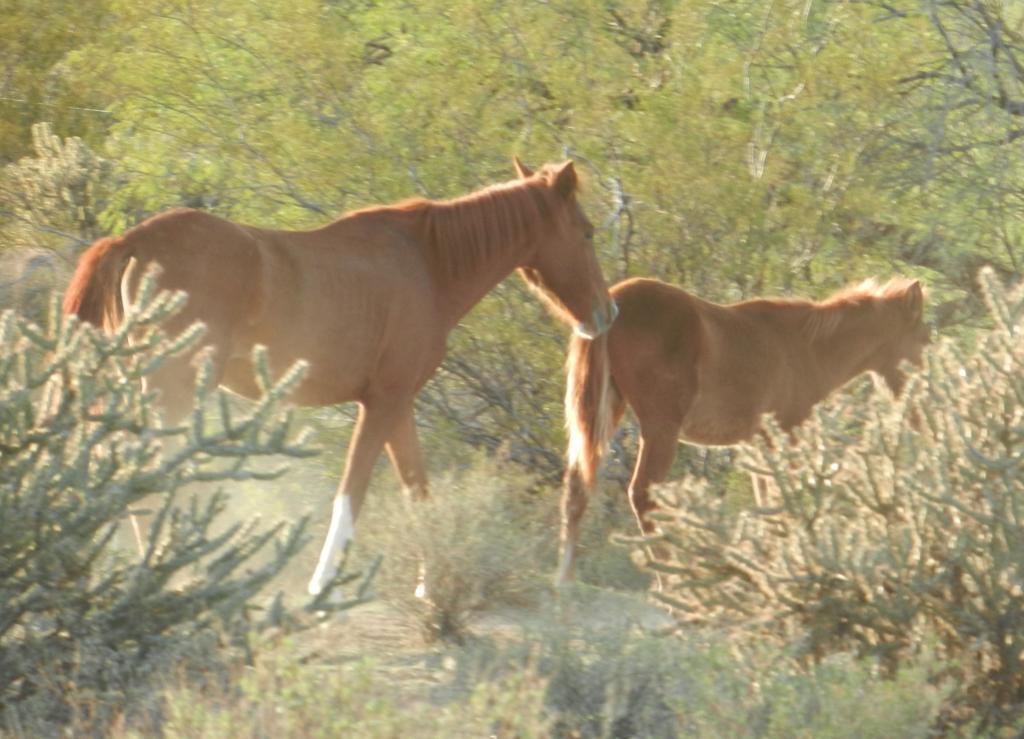 Riding Wildhorse Ext/ Wildhorse east to west-dscn0396.jpg
