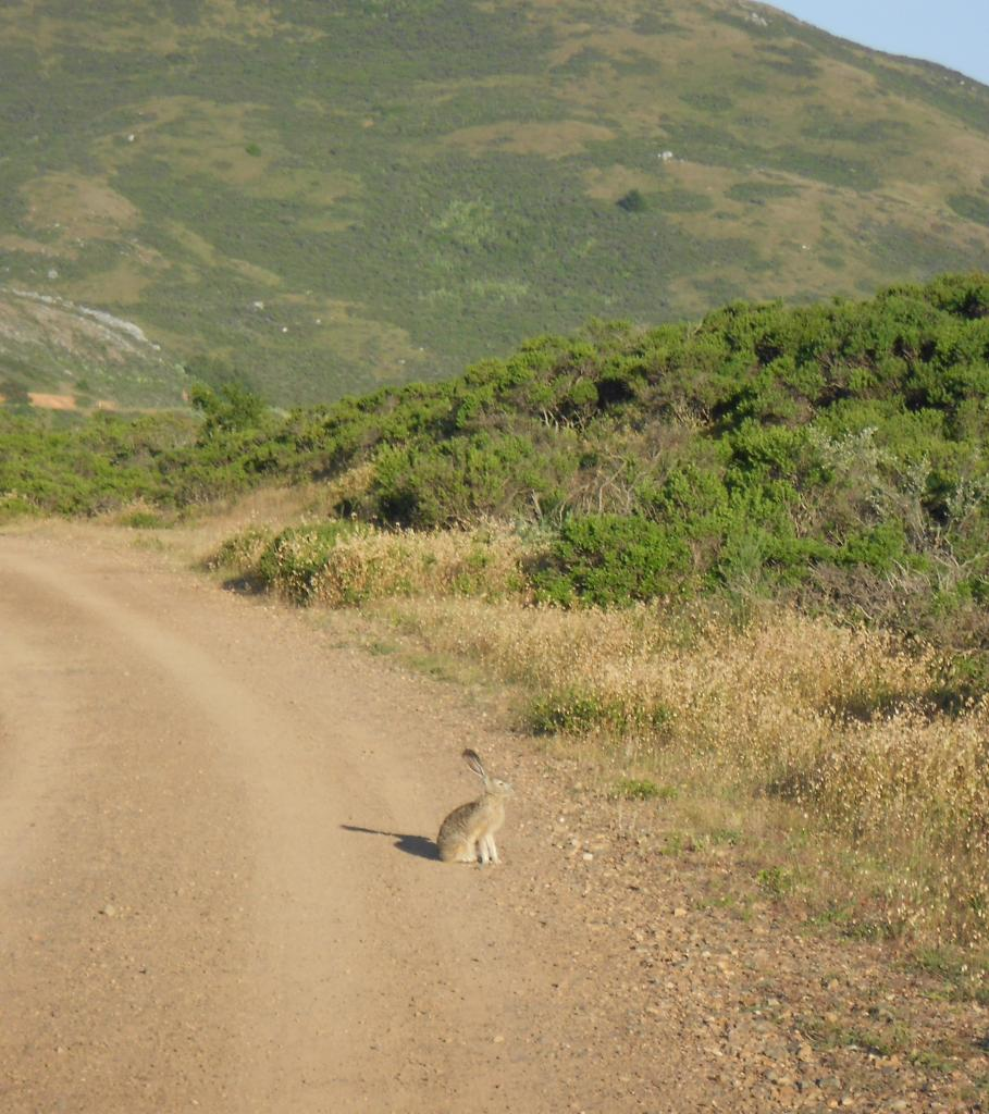 Wildlife you have seen on trail...post your pics...-dscn0638.jpg