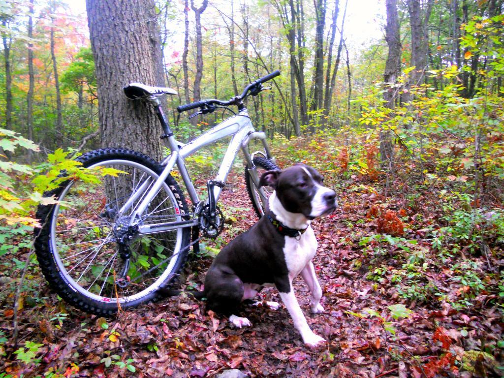 New trail dog-dscn2172.jpg