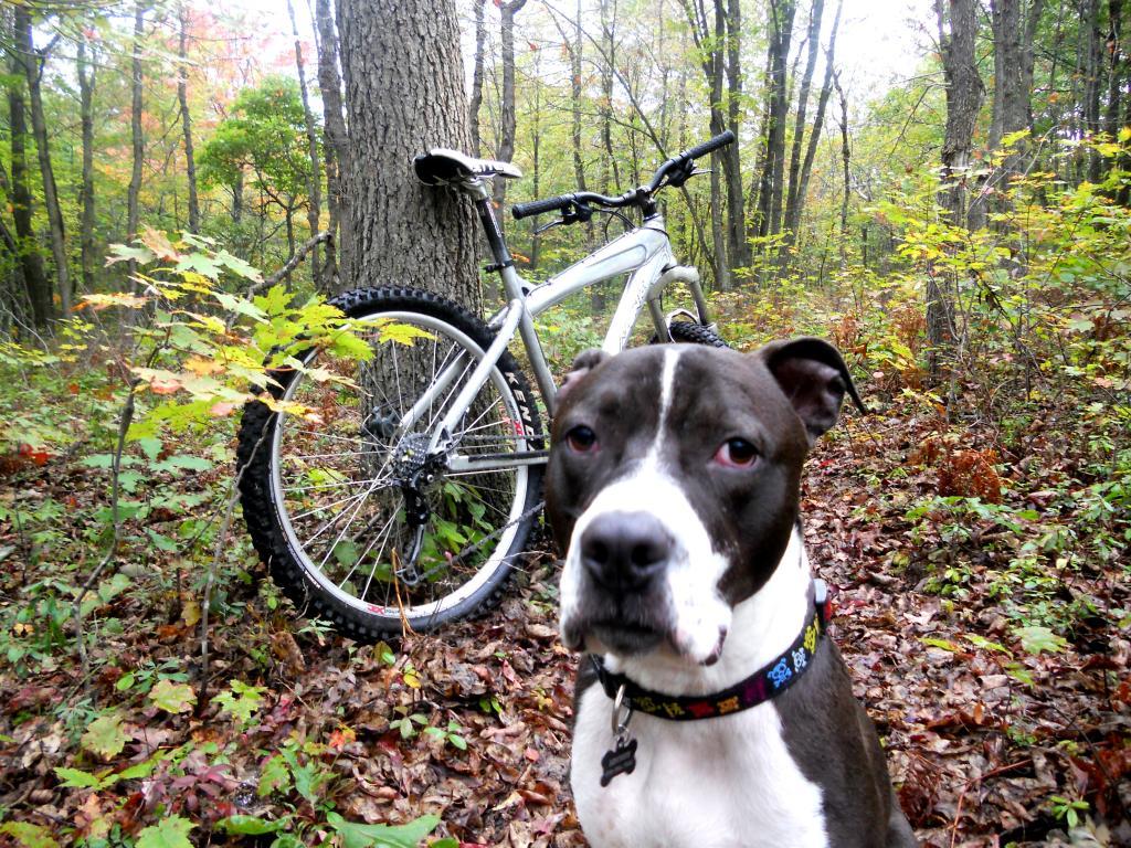 New trail dog-dscn2173.jpg