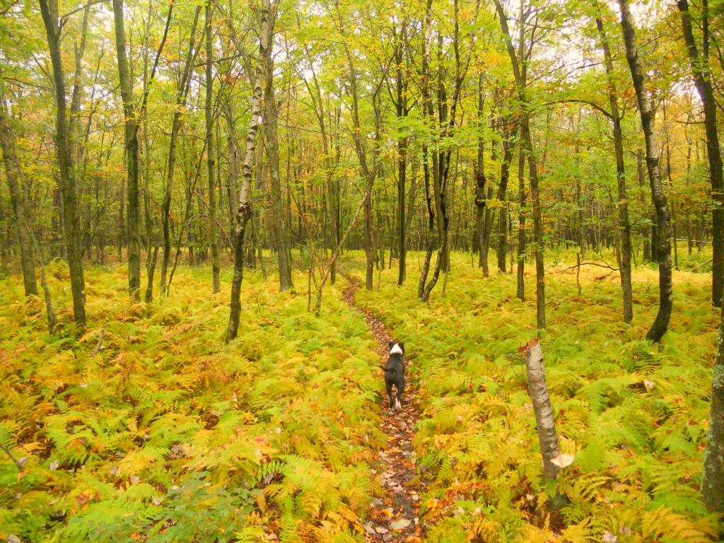 New trail dog-dscn2174.jpg