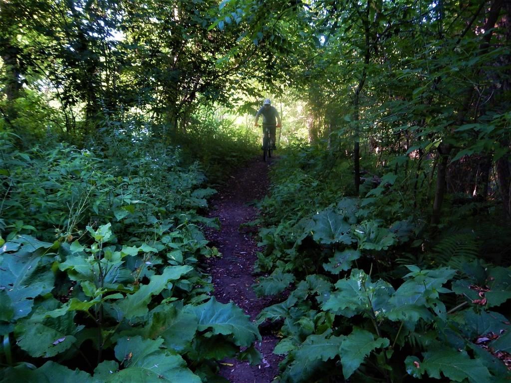 Local Trail Rides-dscn2469.jpg