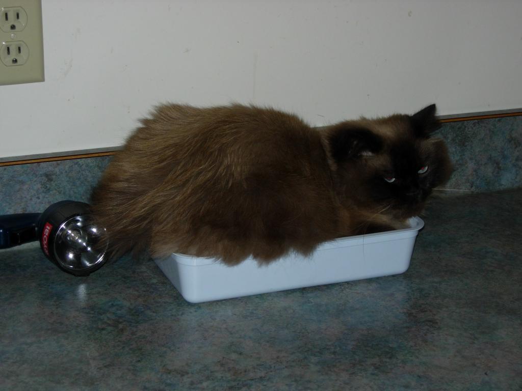 Cat Passion (here kittie, kittie, my new best friend...) Post your cat photos.-dscn3067.jpg