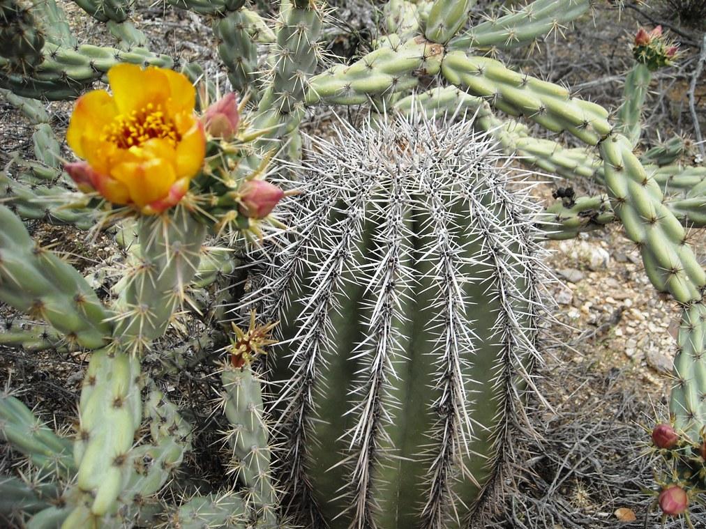 Black Canyon Trail-dscn3106.jpg