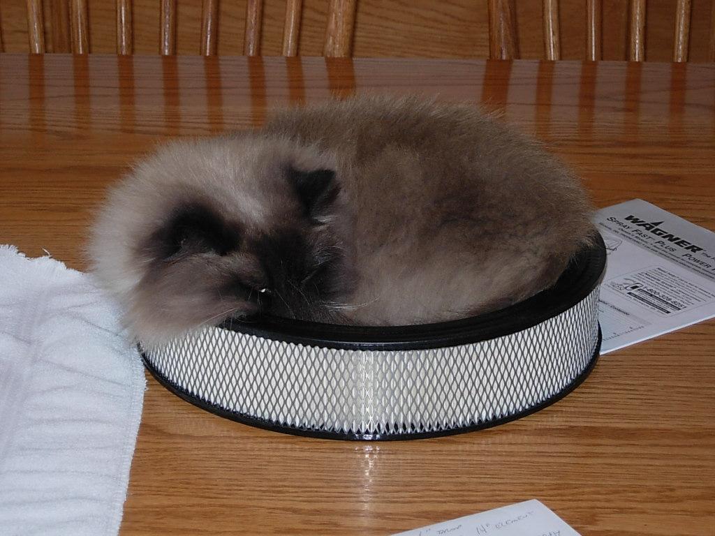 Cat Passion (here kittie, kittie, my new best friend...) Post your cat photos.-dscn3185.jpg