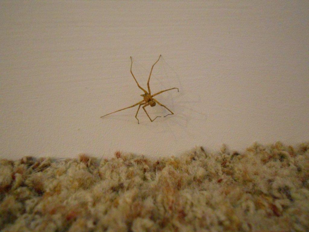 OT: spider ID help-dscn3718.jpg