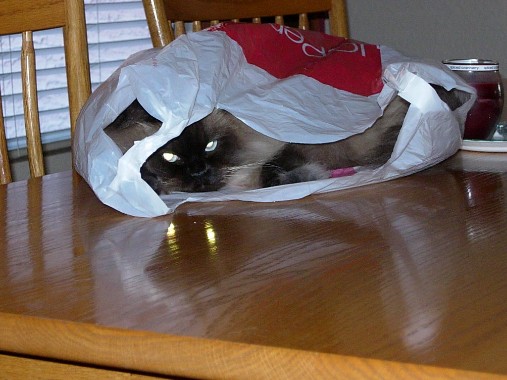 Cat Passion (here kittie, kittie, my new best friend...) Post your cat photos.-dscn3922.jpg