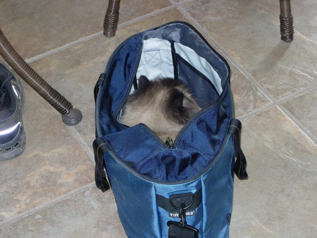 Cat Passion (here kittie, kittie, my new best friend...) Post your cat photos.-dscn4509.jpg