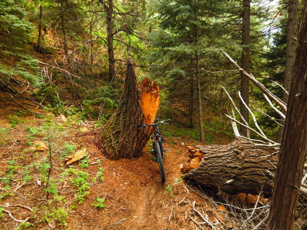 The NM Trail Pix Thread-dscn4605.jpg