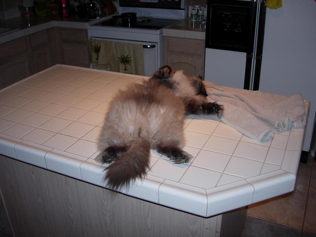 Cat Passion (here kittie, kittie, my new best friend...) Post your cat photos.-dscn4644.jpg