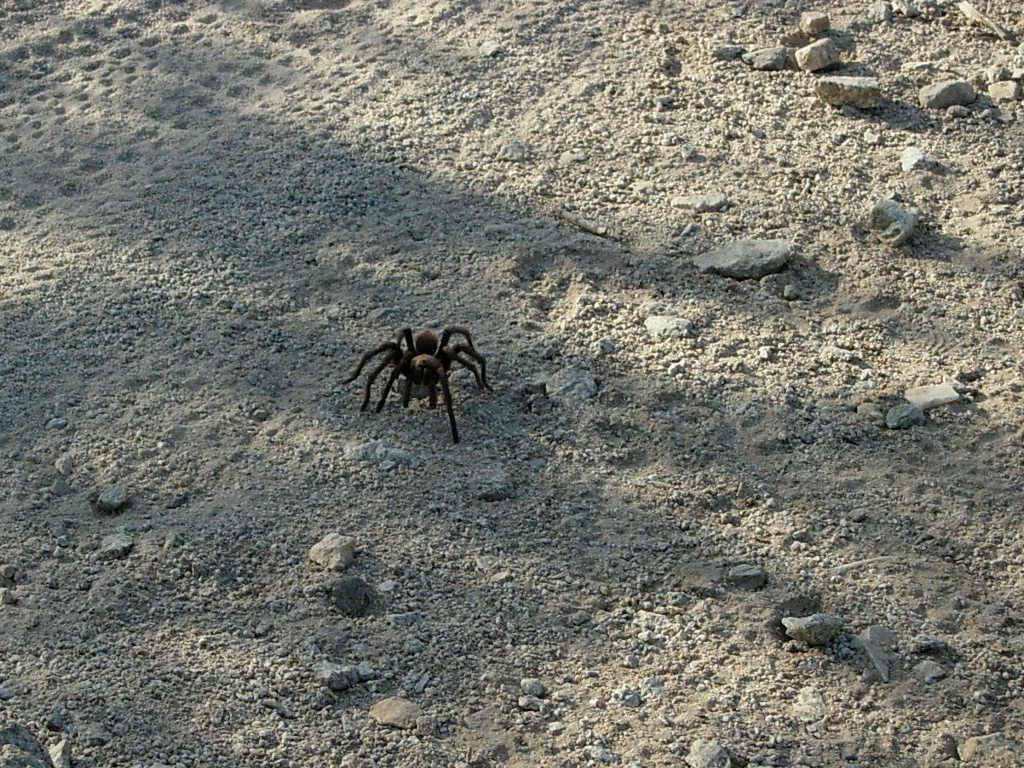 The Scorpion King...-dscn5072.jpg