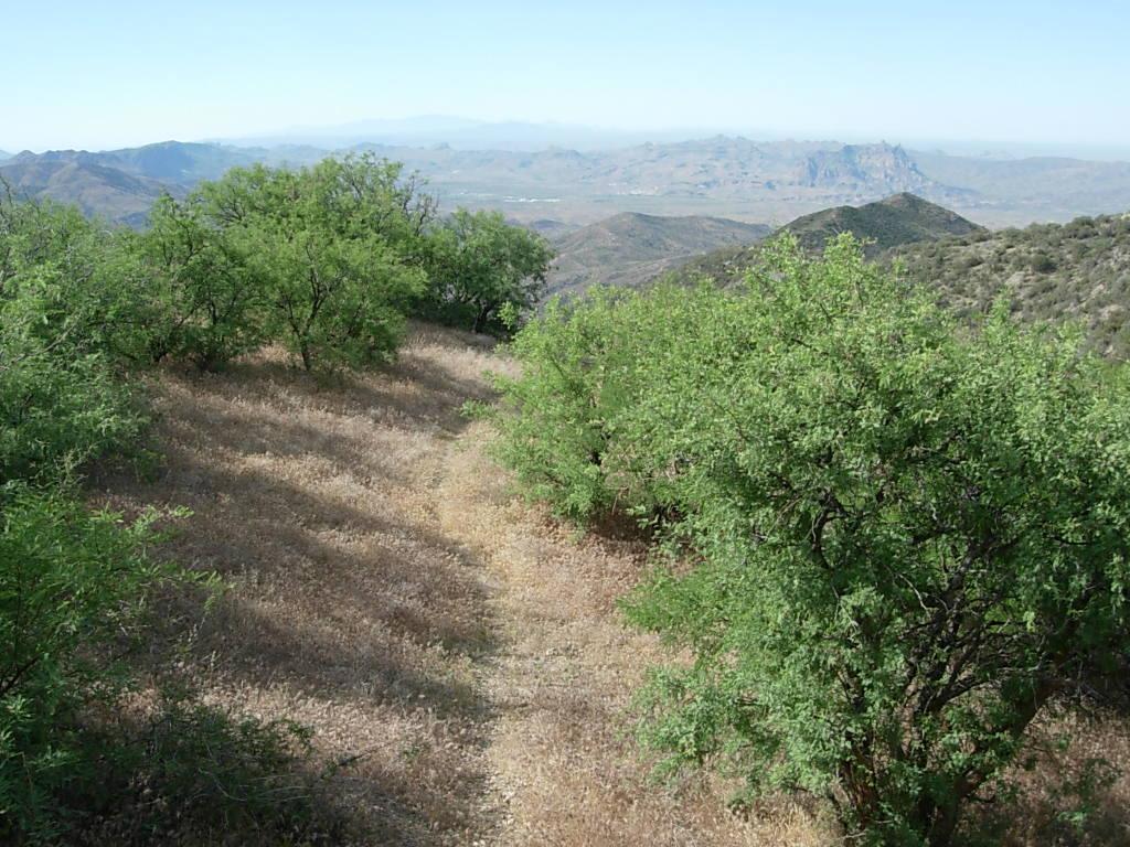 Reavis Canyon, Arizona Trail-dscn5835.jpg