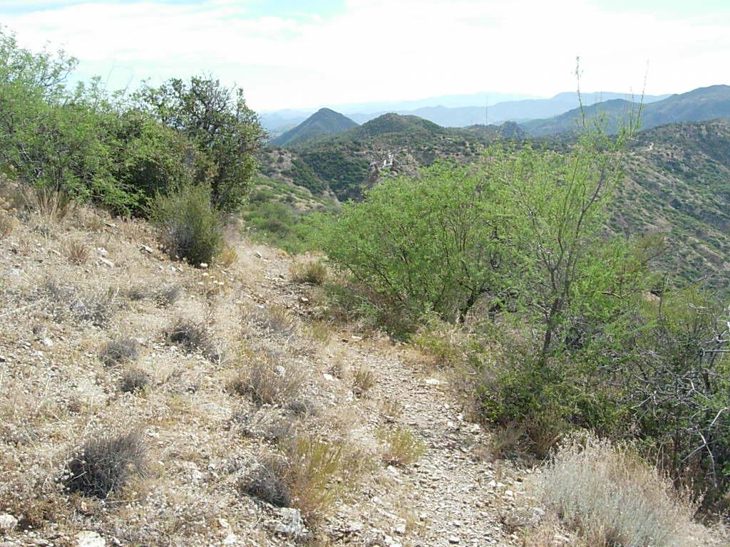 Reavis Canyon, Arizona Trail-dscn5839.jpg