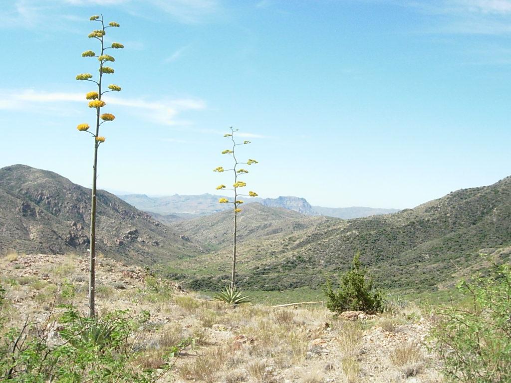 Reavis Canyon, Arizona Trail-dscn5844.jpg
