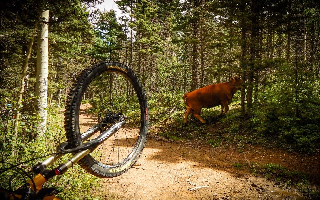 The NM Trail Pix Thread-dscn5942.jpg