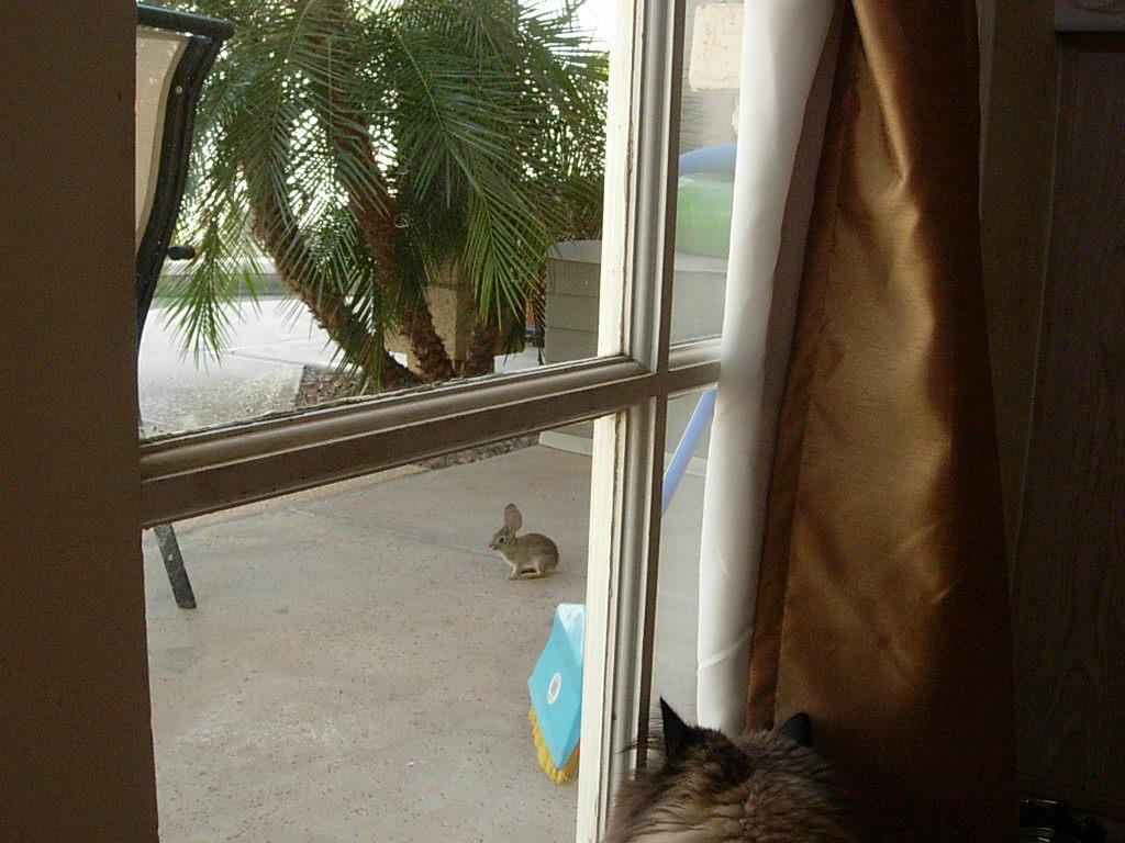 Cat Passion (here kittie, kittie, my new best friend...) Post your cat photos.-dscn5973.jpg