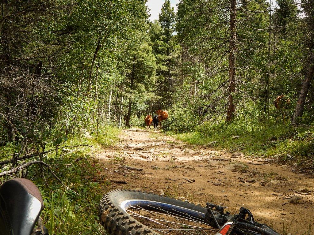 The NM Trail Pix Thread-dscn5974.jpg