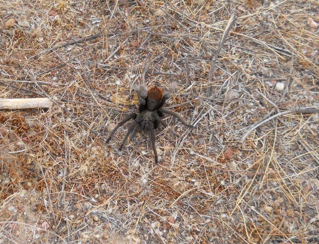 Wildlife you have seen on trail...post your pics...-dscn6771.jpg