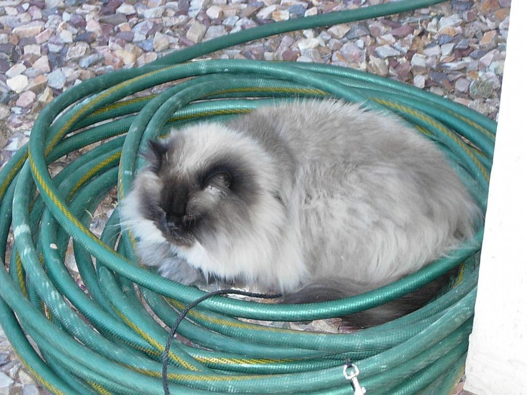 Cat Passion (here kittie, kittie, my new best friend...) Post your cat photos.-dscn6797.jpg