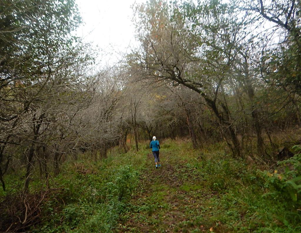 Local Trail Rides-dscn8629.jpg