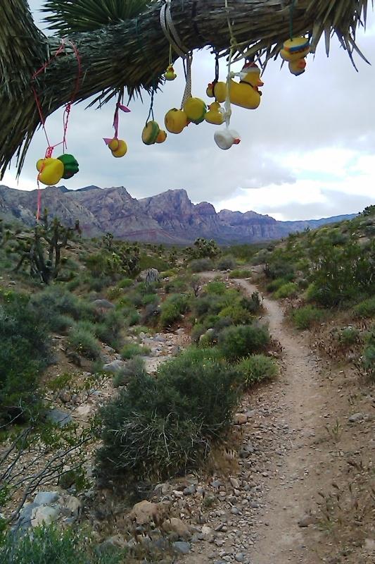 Las Vegas Cowboy Trails: Flat, Wide, Boring......-duck.jpg