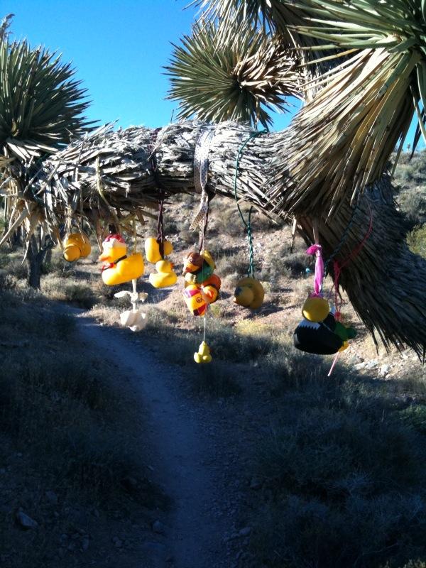 Viva Las Vegas!-ducks.jpg