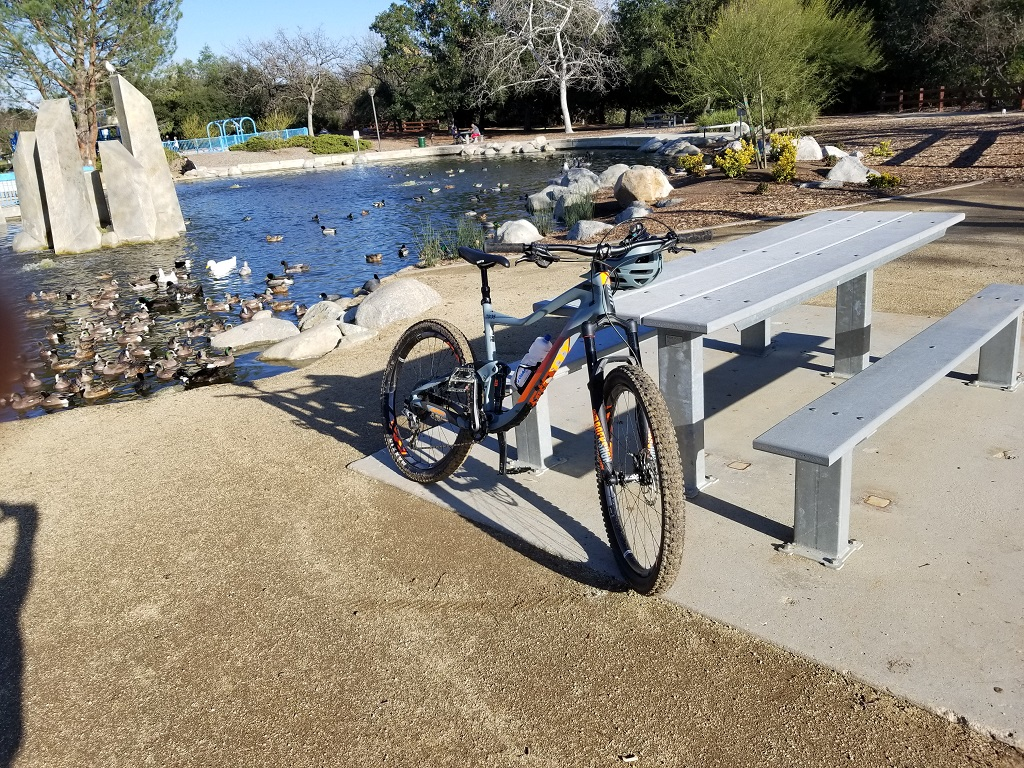 did you ride today?-ducks2.jpg