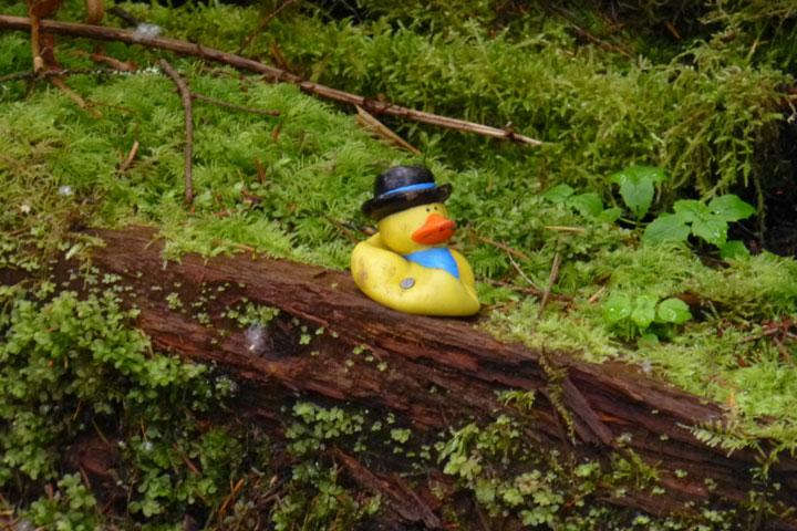 Finally Glenn rode Moss Lake-ducky.jpg