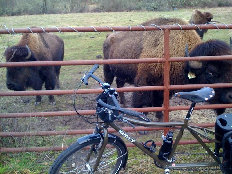 Post Pics of your Cargo Bike-dumb-buffalo.jpg