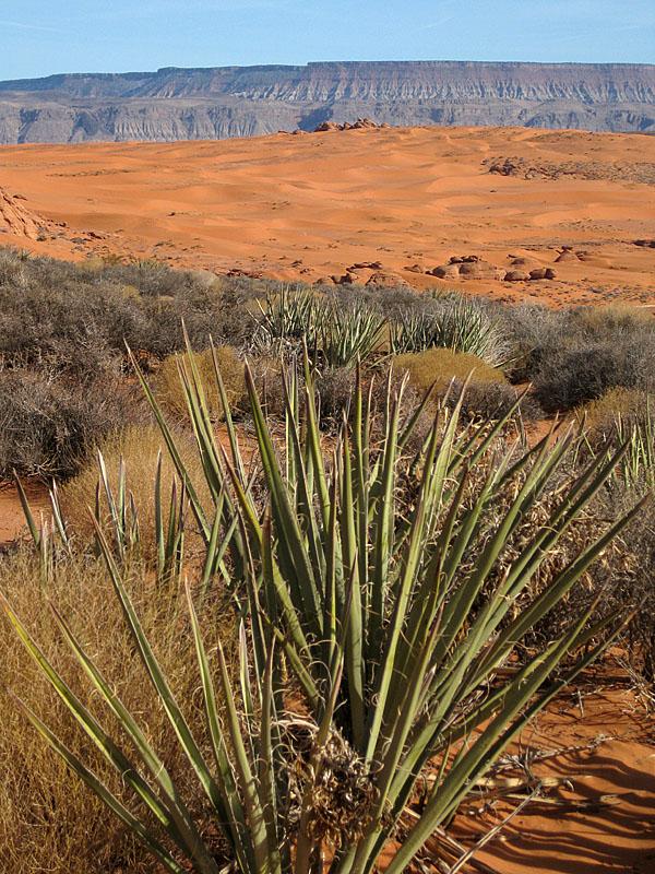 Return to Sand Mountain.-dunes.jpg