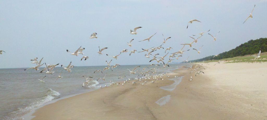 Beach/Sand riding picture thread.-dunes_6.jpg