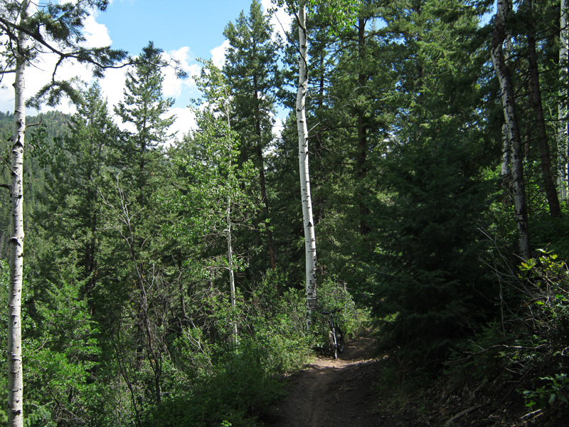 durango trail recommendation - one trail only-durango_forest.jpg