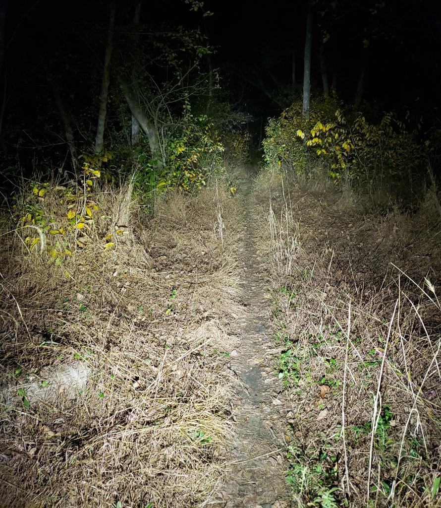 Just Received;  Fireflies E01 ( 10 / 2019 )-e01ravetrail500.jpg