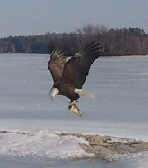 Seen any wildlife on the trail?-eagle-.jpg