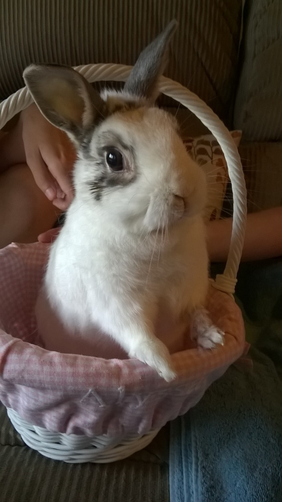 Happy Bunday :0)-easter-sunday-2016.jpg