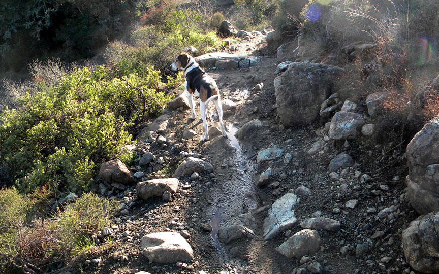 How to train a trail dog?-eddiertockgarden.jpg