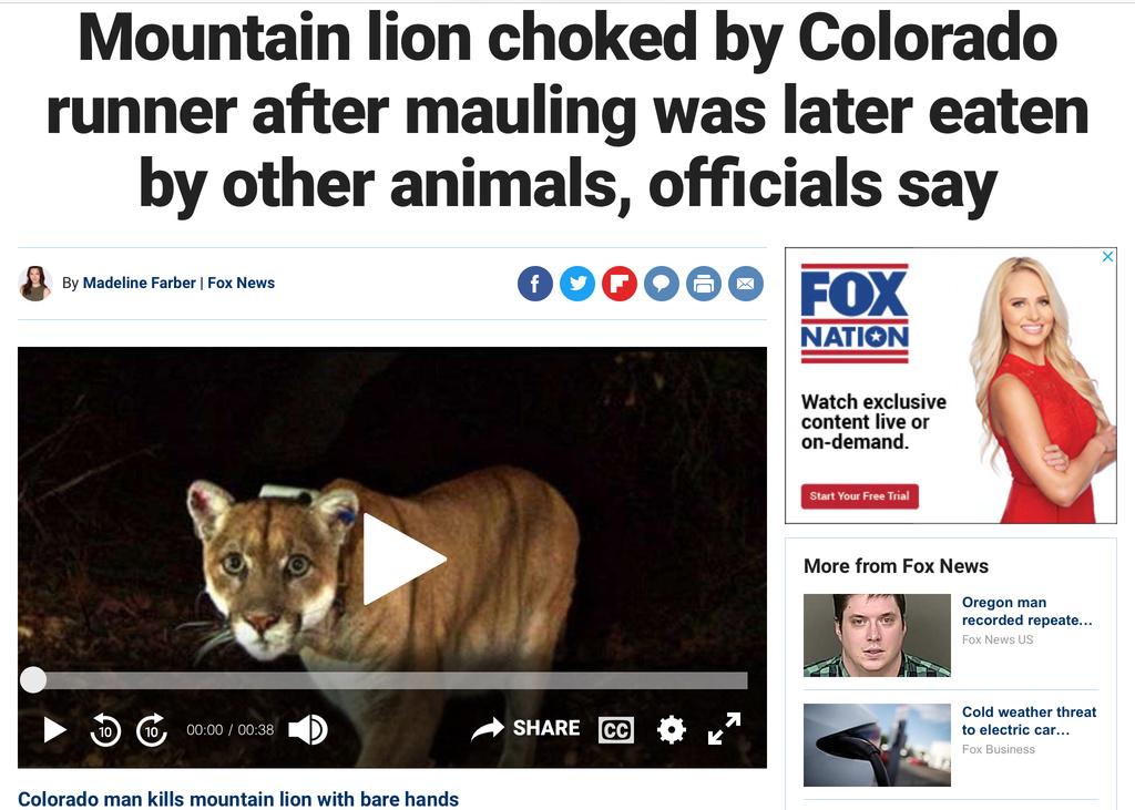 Mountain Lion Attack, Colorado.-ef94df52-5b12-41f9-a75b-daf3492773cc.jpg
