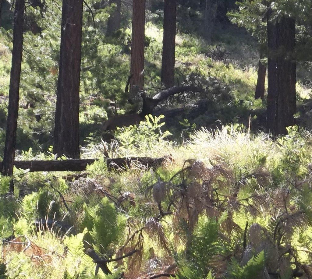 Los Burros Loop, Wildlife and trail photos-elk3.jpg