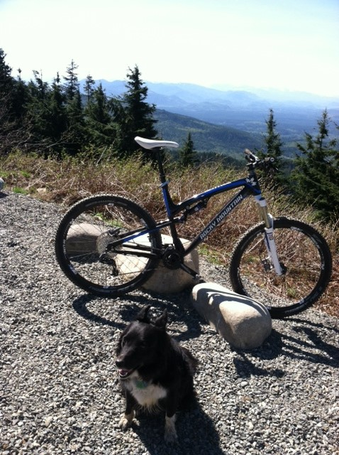 Trail Riding with dog-ellie-rm-tiger.jpg