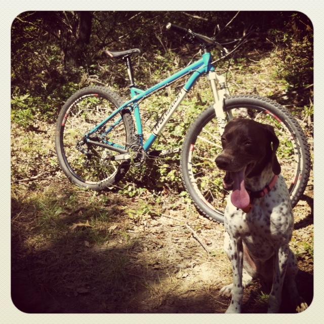 New trail dog-emma.jpg