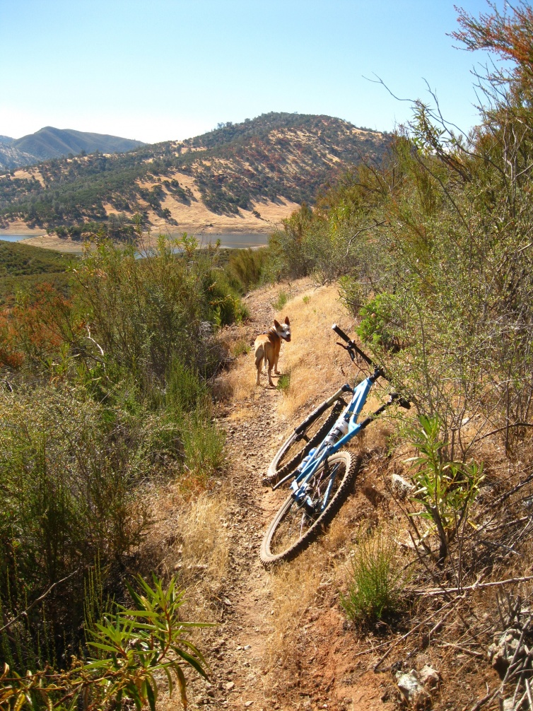 Anyone up for Skyline (Napa) tomorrow?-endo-bike-trail.jpg