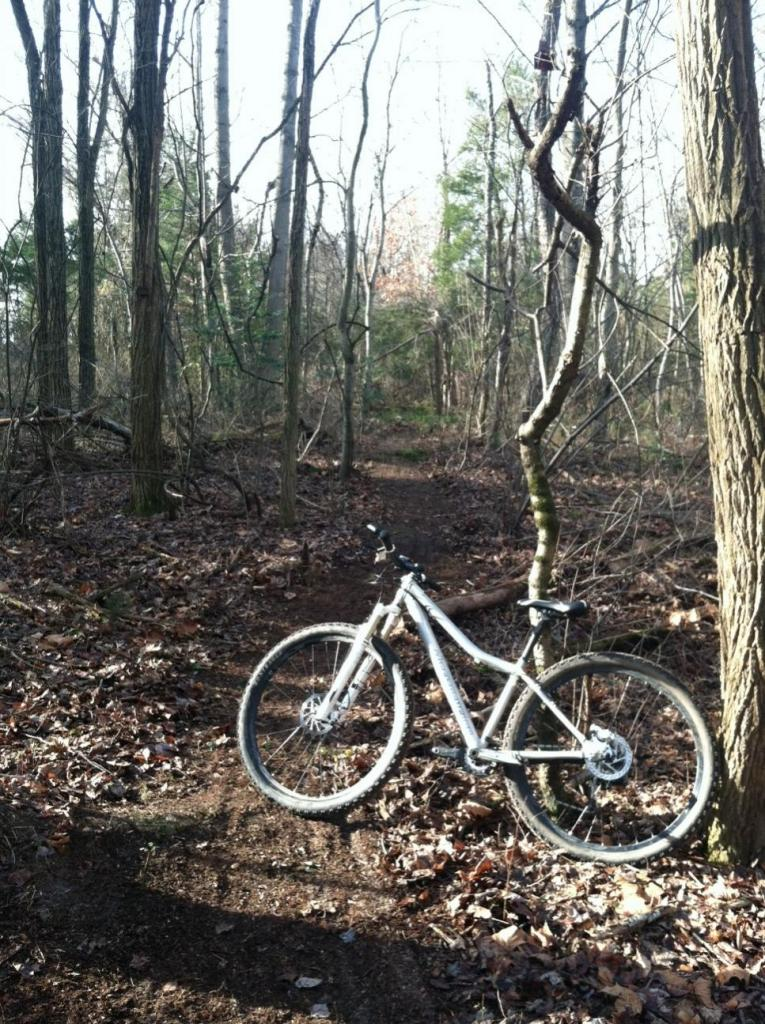 29ers In The Fall-endor3.jpg