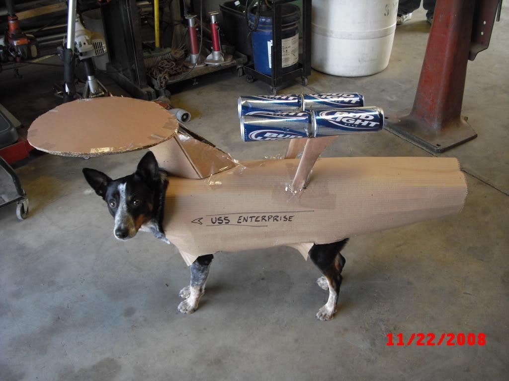 Dogs : Why?-enterprise.jpg