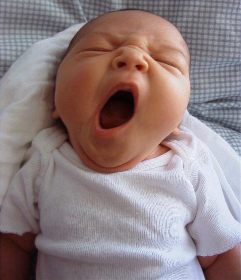 Ac-erica-yawn-200305211.jpg